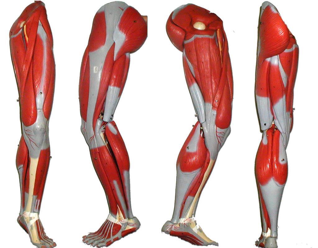 Программа тренировки ног на 4 недели