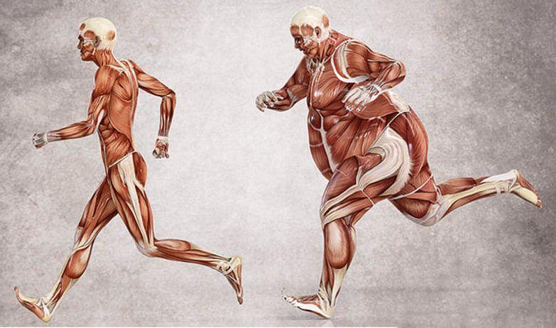 Мышечная биохимия - как правильно тренироваться для похудения?