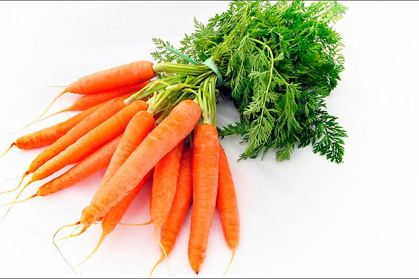 Польза моркови, масла семян и масла корня моркови