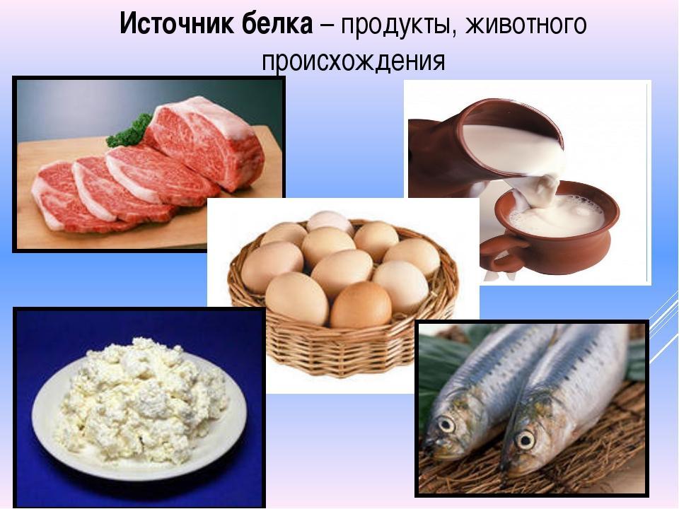 Основные источники белка