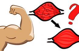 Хочешь накачать мышцы