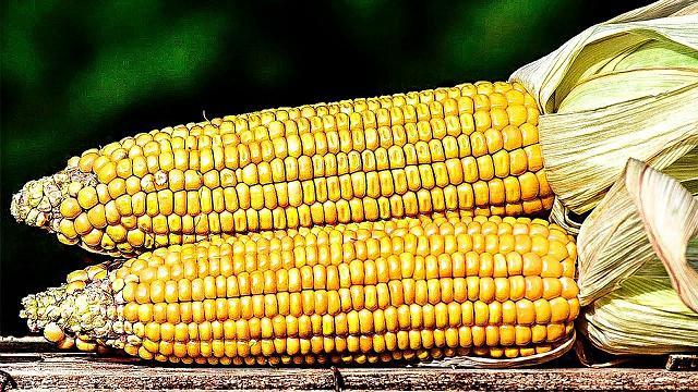 Кукурузная диета Китнера