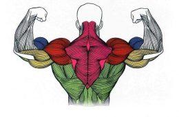 Правила построения мышечных объемов и силы